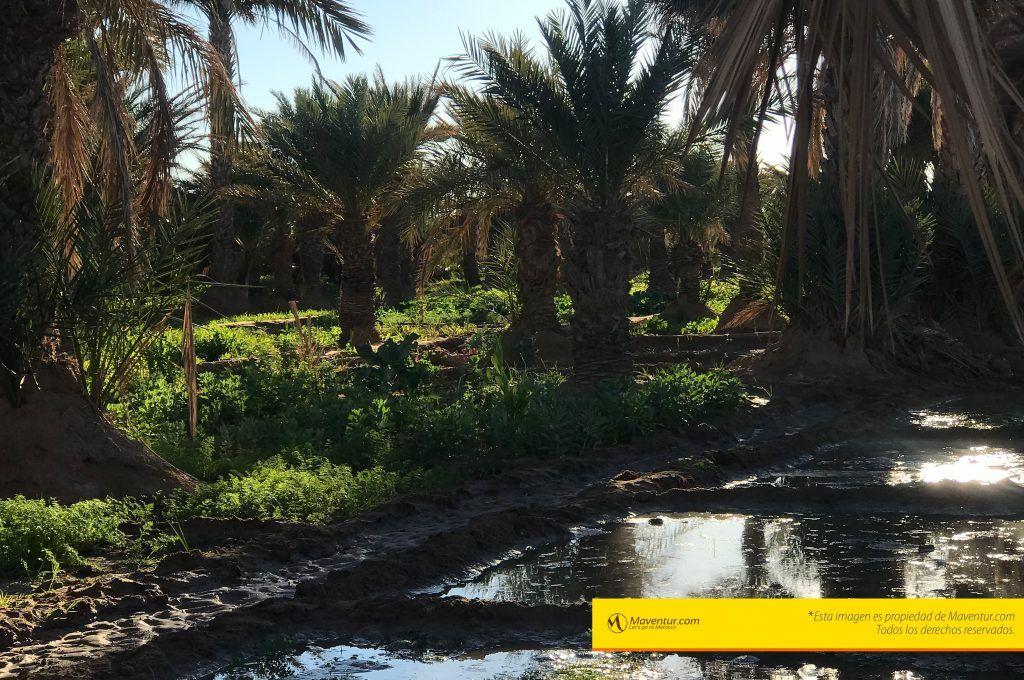 palmeral-oasis-hassilabied-maventur-visita