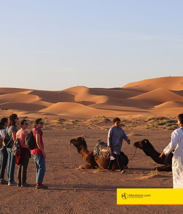 Maventur paseo en camellos merzouga sahara